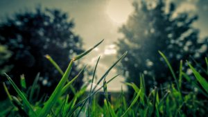 Landscape Design by DC Lawn & Landscape in Fairhope, AL