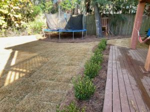 Sod and pine straw to create a backyard play yard by DC Lawn & Landscape in Fairhope, AL
