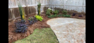 Plants in pine straw by DC Lawn & Landscape in Fairhope, AL