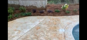 Plants and greenery completing a backyard by DC Lawn & Landscape in Fairhope, AL