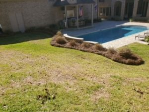 Pine straw surrounding a beautiful pool by DC Lawn & Landscape in Fairhope, AL