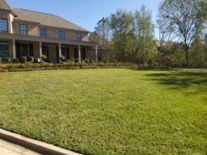 Beautiful green lawn by DC Lawn & Landscape in Fairhope, AL