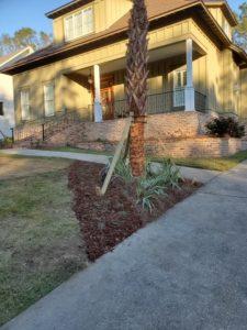 Palm trees in a front yard by DC Lawn & Landscape in Fairhope, AL