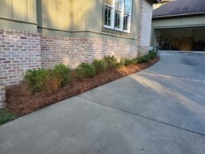 Small green bushes and pine straw lining the side of a home by DC Lawn & Landscape in Fairhope, AL