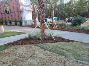 Beautiful palm trees installed by DC Lawn & Landscape in Fairhope, AL