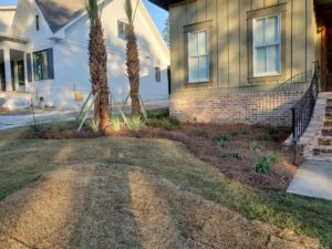Sod and pine straw with palm trees in front yard by DC Lawn & Landscape in Fairhope, AL