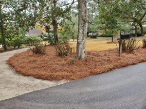 Pine straw surrounding the driveway entrance by DC Lawn & Landscape in Fairhope, AL
