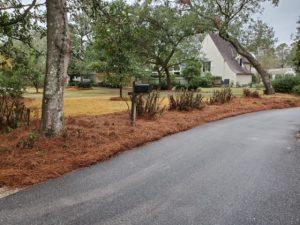 Pine straw beside driveway by DC Lawn & Landscape in Fairhope, AL