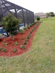 Red mulch and monkey grass surrounding pool by DC Lawn & Landscape in Fairhope, AL