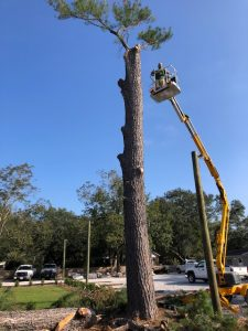 Tree service by DC Lawn & Landscape in Fairhope, AL
