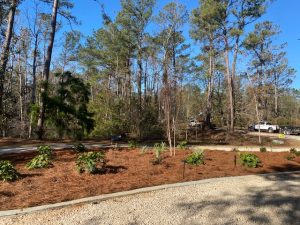 Fresh straw bed with new lighting done by DC Lawn & Landscape in Fairhope, AL