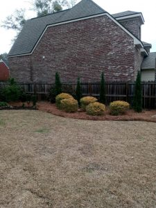 LD pine straw bed with new green plants done by DC Lawn & Landscape in Fairhope, AL