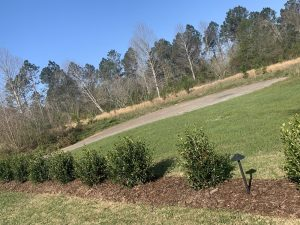 Row of small shrubs by DC lawn and landscape in fairhope, Alabama