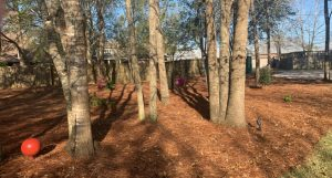 fresh pine straw by DC Lawn and Landscape in Fairhope, Alabama