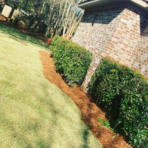 fresh sod by DC lawn and Landscape in Fairhope, Alabama