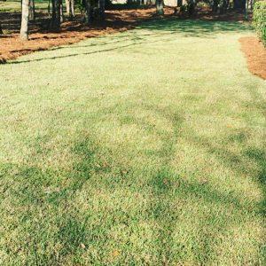 freshly sodded lawn