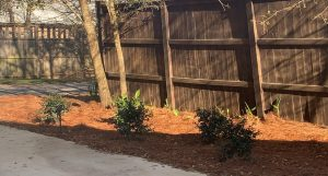 pine straw and shrubs lining a fence by DC Lawn and Landscape in Fairhope, Alabama
