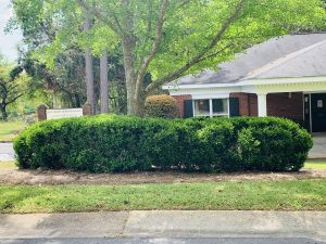 landscaping by dc lawn and landscape in fairhope, alabama
