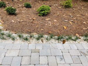 rock and plants done by dc lawn and landscape in fairhope, al