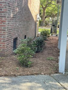 small shrubs lining a house by DC lawn and Landscape in fairhope, alabama