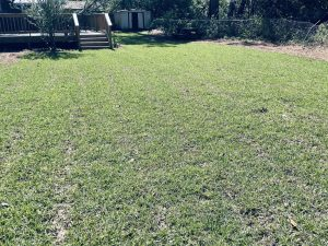 new sod by DC lawn and landscape in Fairhope, Al