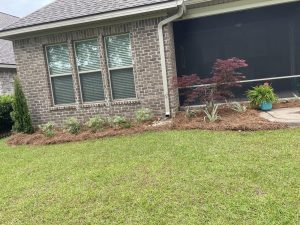 straw bed with shrubs done by DC lawn and Landscape in Fairhope, Al