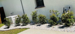 Rock bed with shrubs by DC Lawn and Landscape in Fairhope, alabama
