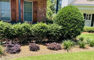 straw bed with shrubs and plants done by DC lawn and Landscape in Fairhope, al