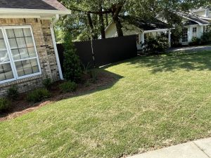 new sod done by DC Lawn and Landscape in Fairhope, Alabama