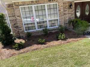 pine straw bed with shrubs