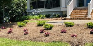 sod and flowerbed by DC lawn and landscape in fairhope, alabama